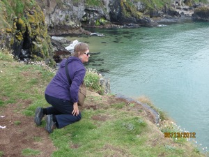 If there is a cliff, Peggy will come. Looking for puffins
